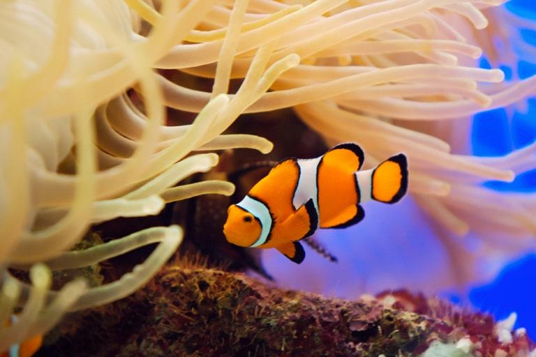 cute female fish names