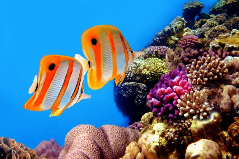 cute fictional fish names
