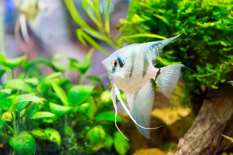 cute male fish names