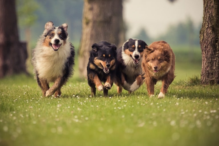 dog will be able to get it from its canine friends