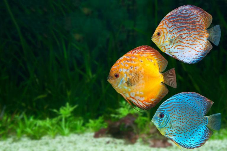 new pet fish