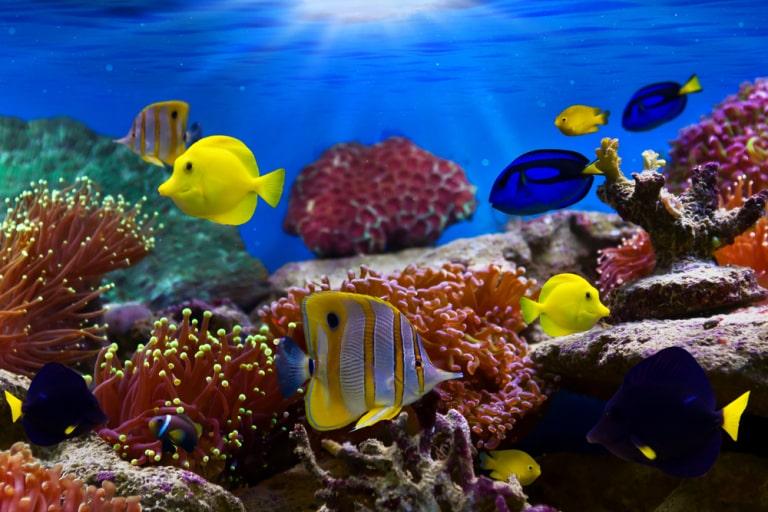 rare cute fish names